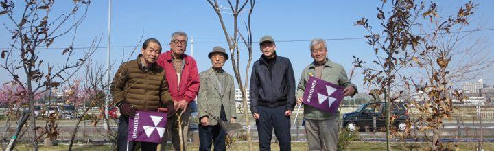 2019年 3月 2日 海老名市・三日月地(NPO法人えびなの森の楽校 管理)にカタルパの苗木を寄贈して植樹